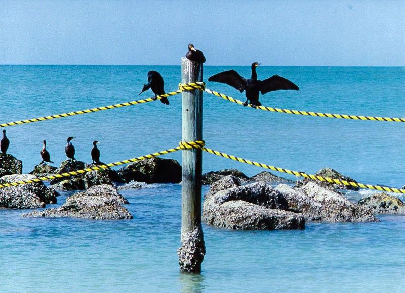 FLORIDA_BIRDS1