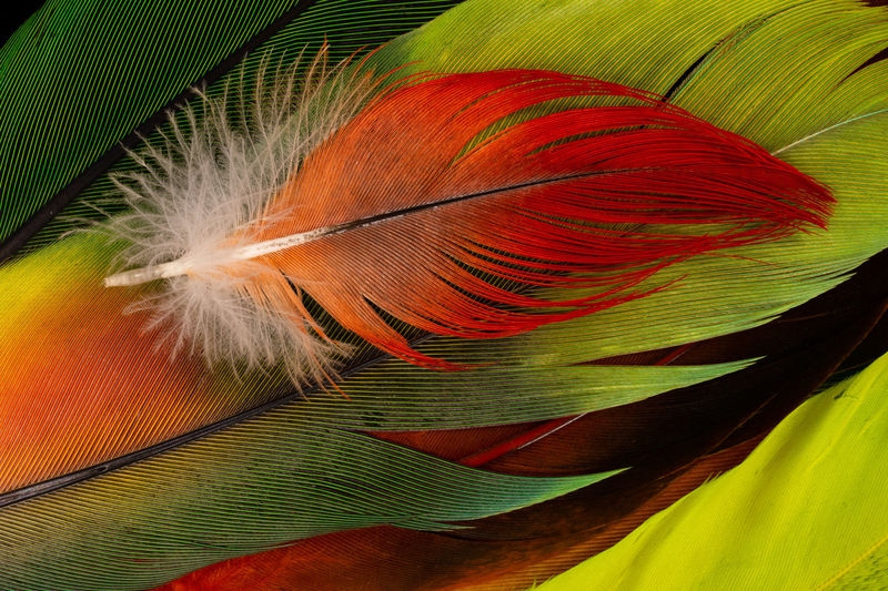 Feathers of a Bird