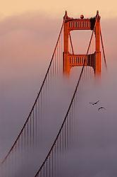 Golden Gate Fog (MotoMannequin)