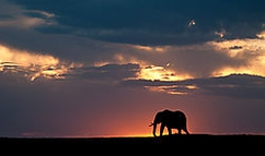 Silhouette of an elephant at sunset in the Masai Mara National Reserve, Kenya