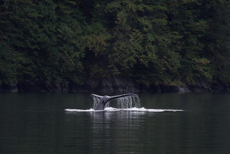 Great Bear Rainforest cruiser