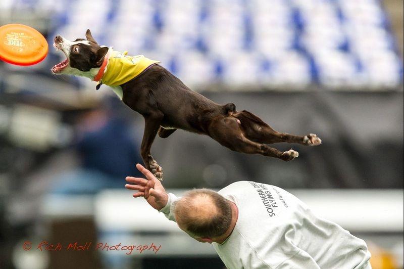 Just Dog Crazy