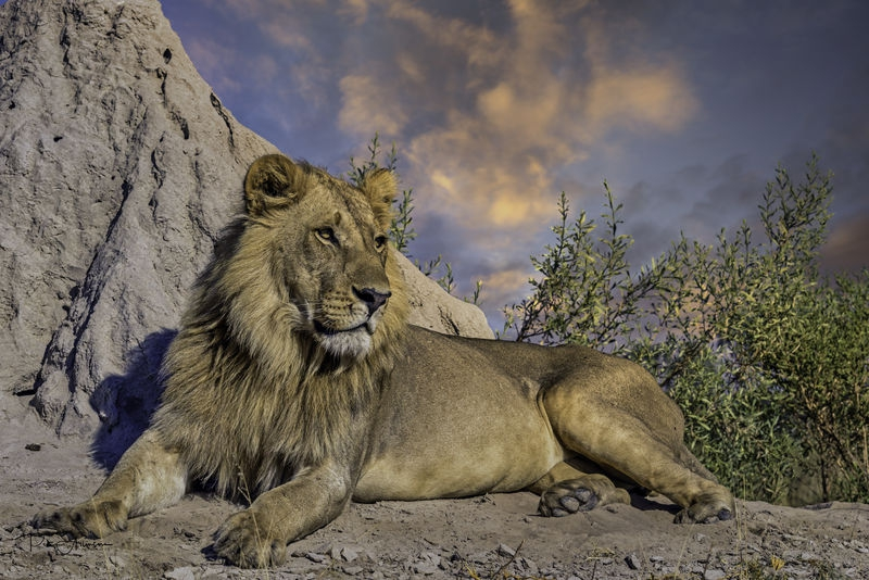 April Wildlife Contest – Apex Predators