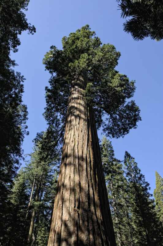 Yosemite_017_2009