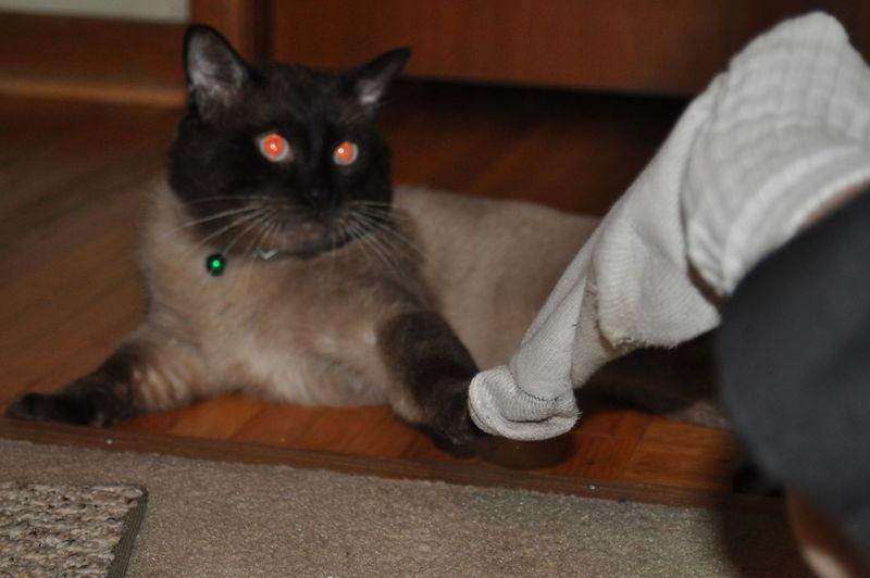 Cat stealing sock  #1