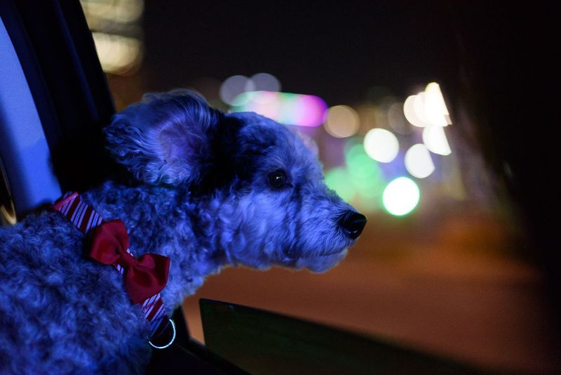 Sequential Shots - Riding in cars with dogs #2