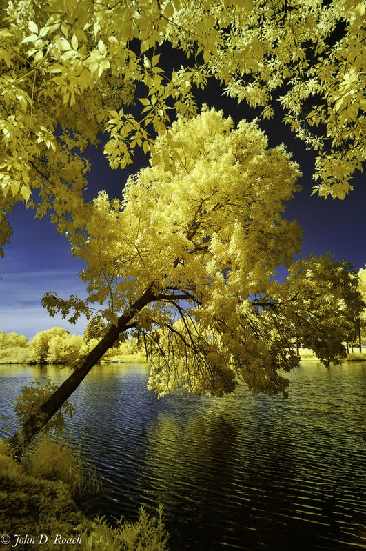 Tilted_Tree_at_the_Lagoon-3