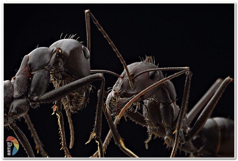 Short Story, Ants