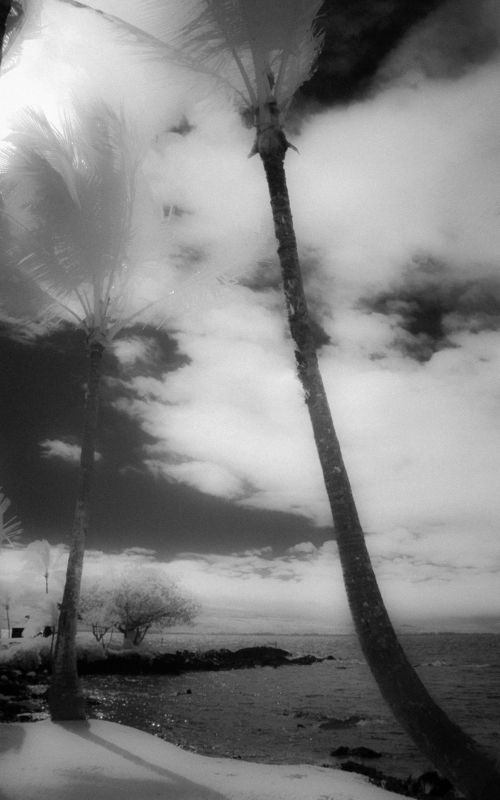 TREES_SKY_CLOUDS