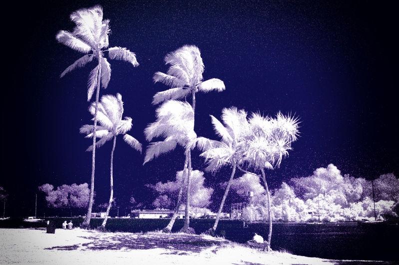 TREES_REEDS_BAY_0028