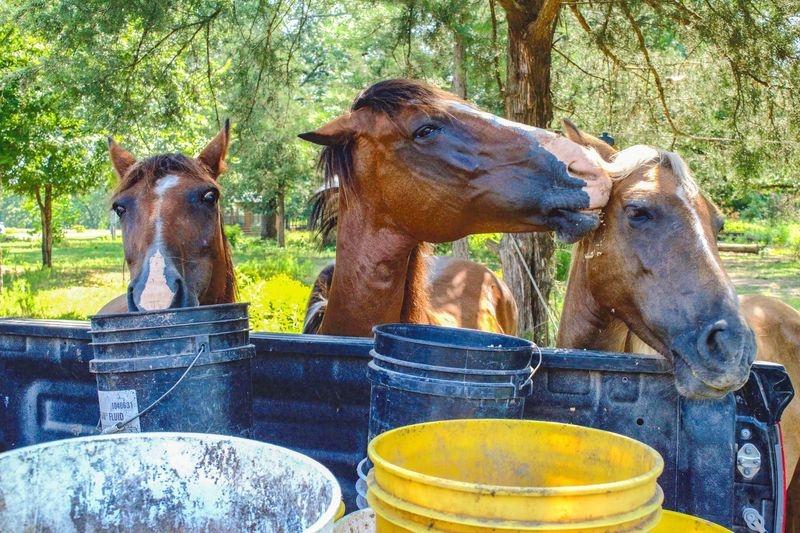Heritage Horses of Oklahoma