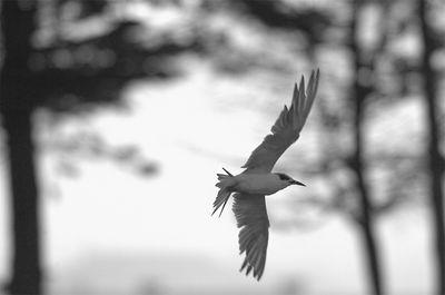 Tern I