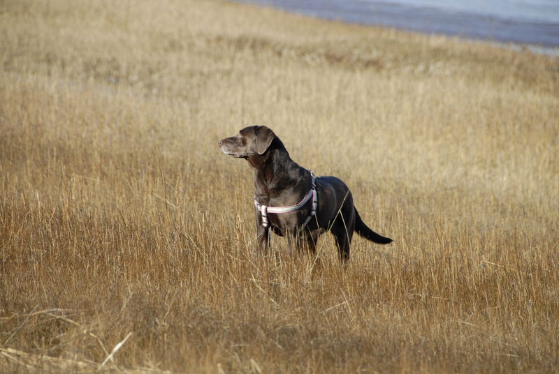 Olive in the wild grass; Cape Cod National Seashore