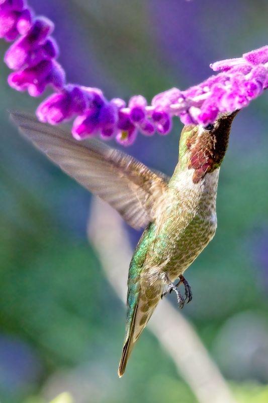 Mission Hummingbird2