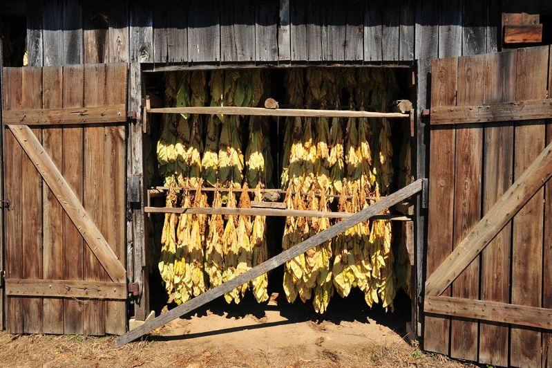 Maryland Tobacco Barn
