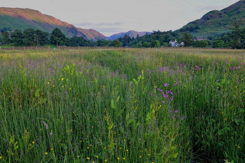 Lake District meadow
