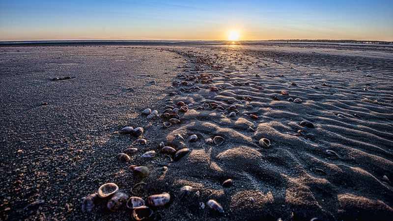 Land of Sand and Shells