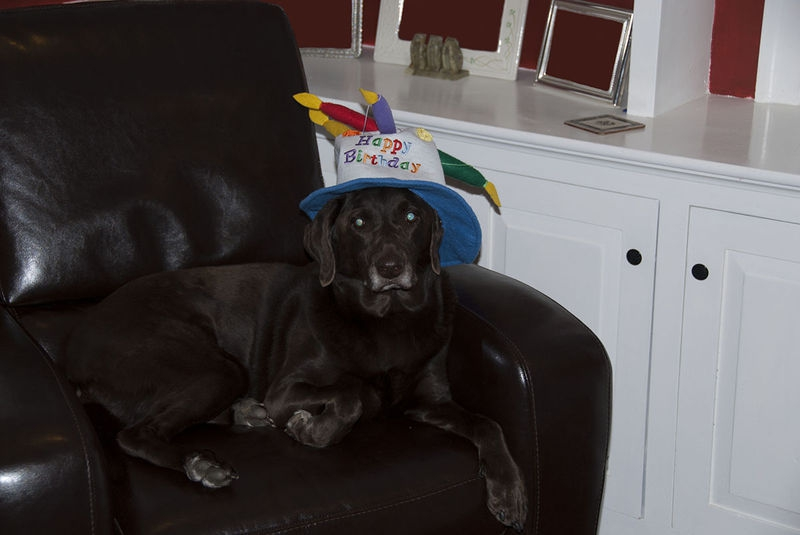 Olive's 10th Birthday