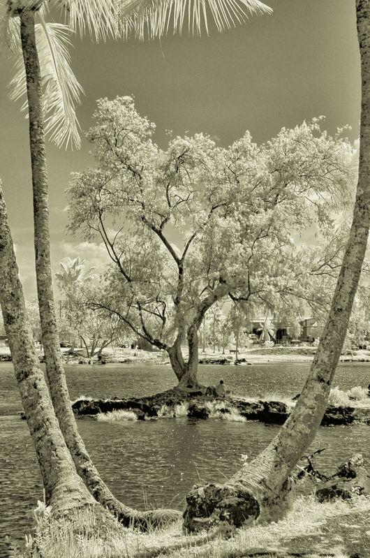 TREE_REEDS_BAY_0051