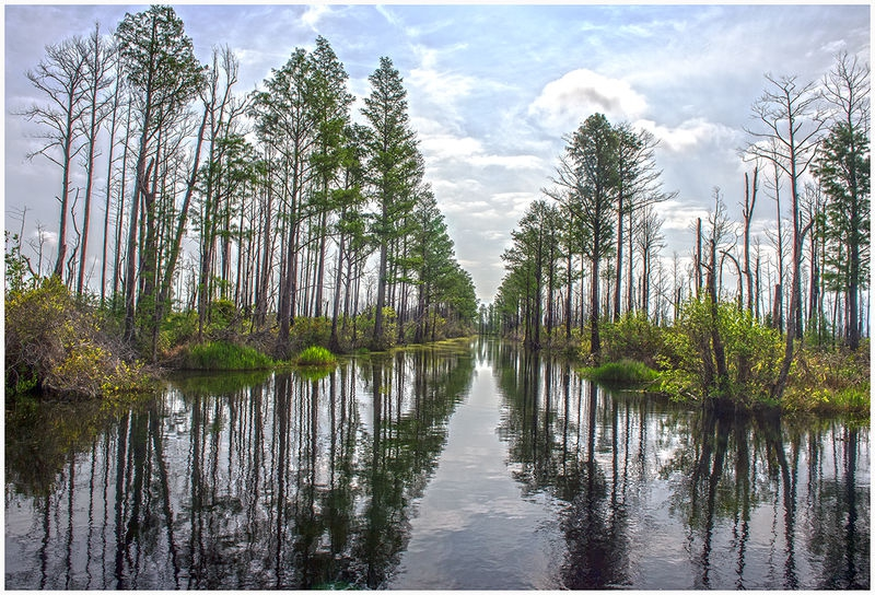 Okefenokee Canal