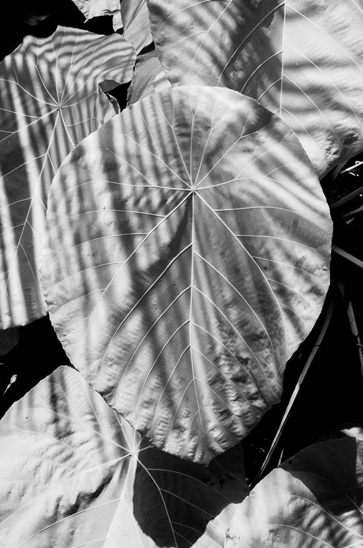 Plant_2_with_Shadows