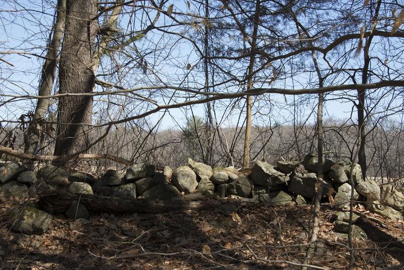 Stone wall- Hamlen Woods, Sudbury MA
