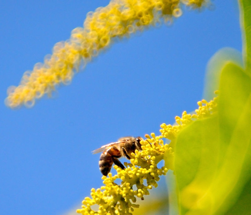 Bee on a Tree