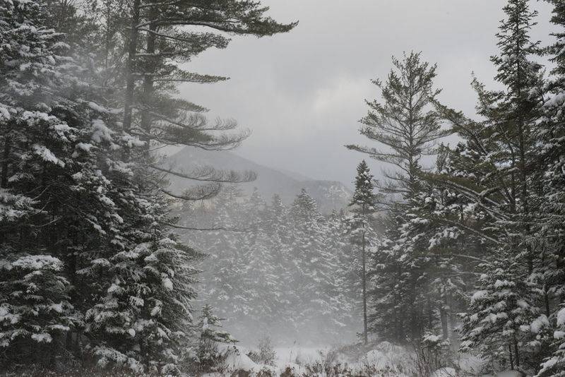 Black Pond, White Mountain National Forest, NH