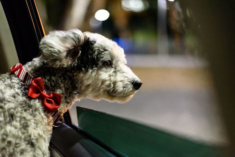 Sequential Shots - Riding in cars with dogs #1