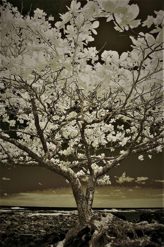 TREE_1518C