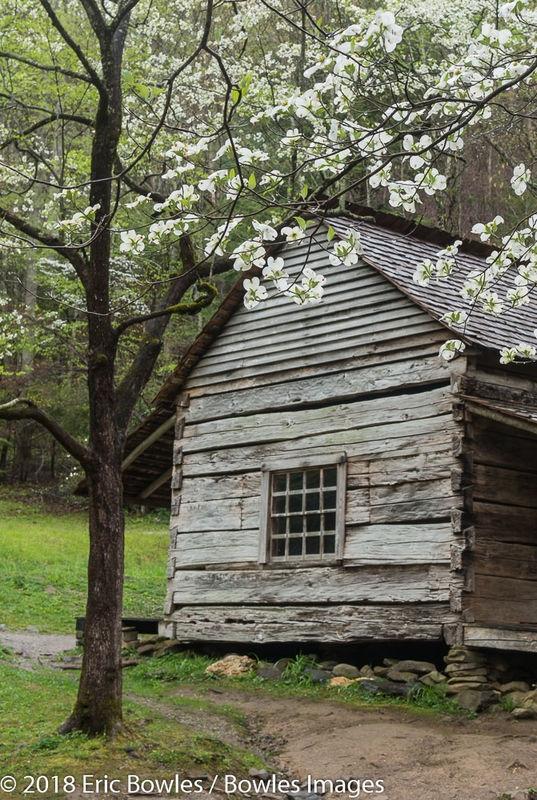 Ogle Cabin with Dogwoods in Roaring Fork