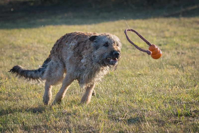 hunting a rubber ball