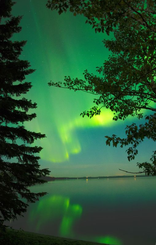 Auroras Framed by Trees