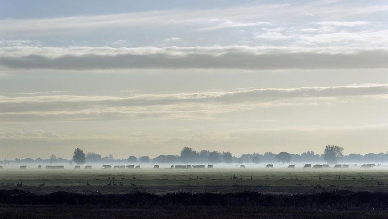 Misty morning in the dutch biblebelt