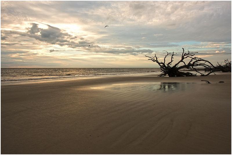 Driftwood Beach-Sunrise