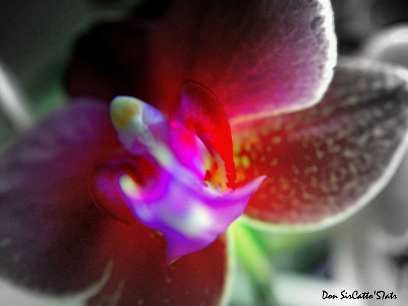 Orchid S#3