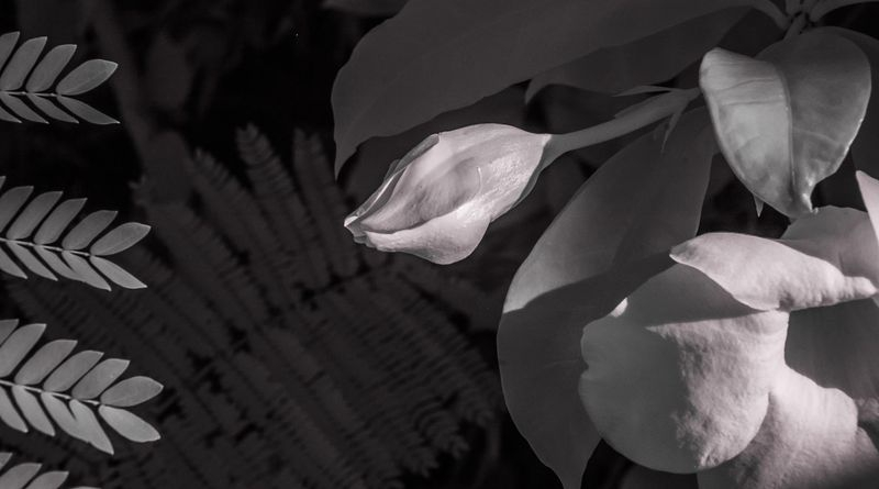 BLOSSOMS_and_LEAVES