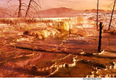 Upper terrace bathed with gold light - Yellowstone