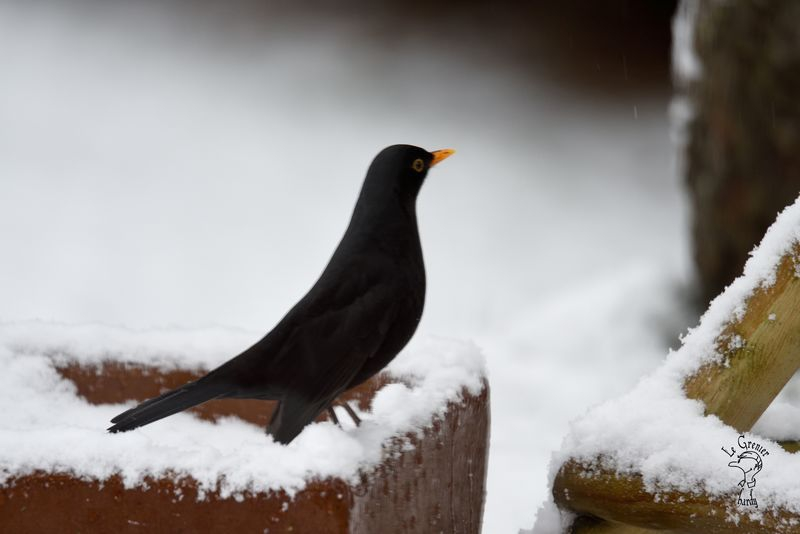 Vögel im Wintermonat