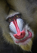 Winner September Macro