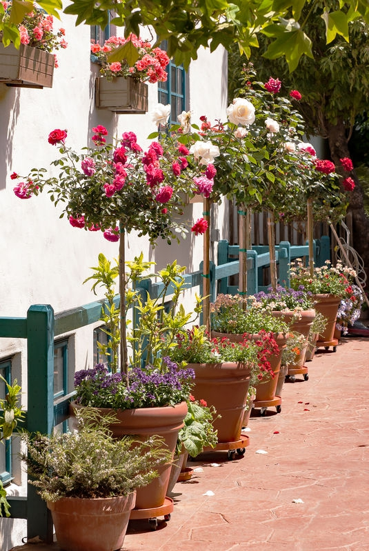 Carmel-By-The-Sea, Urban Landscaping