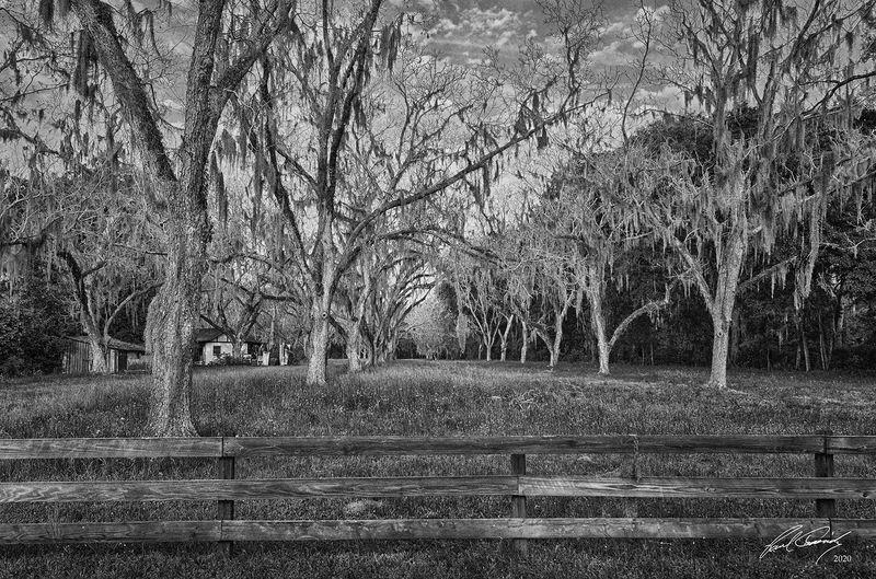 Pecan Grove