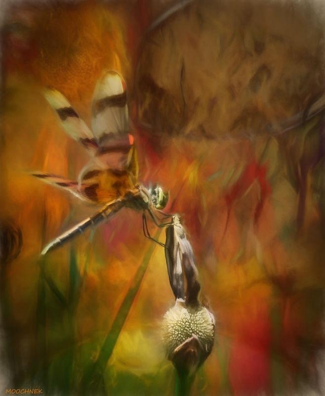 Dragon Fly Fantasy'