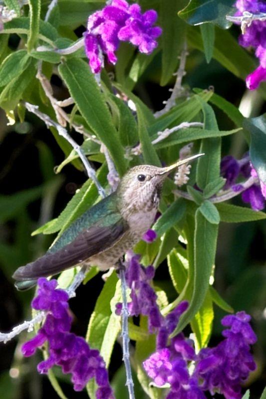 Mission Hummingbird