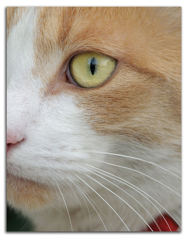 Milo's Eye