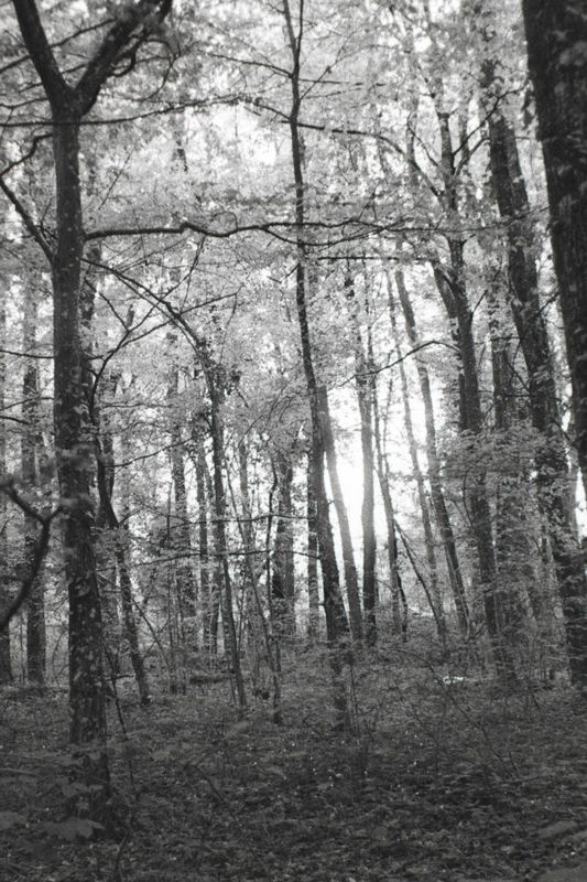 Forest_Light_2.jpg
