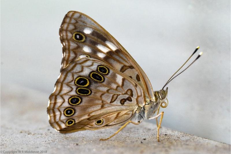 butterfly_1edit