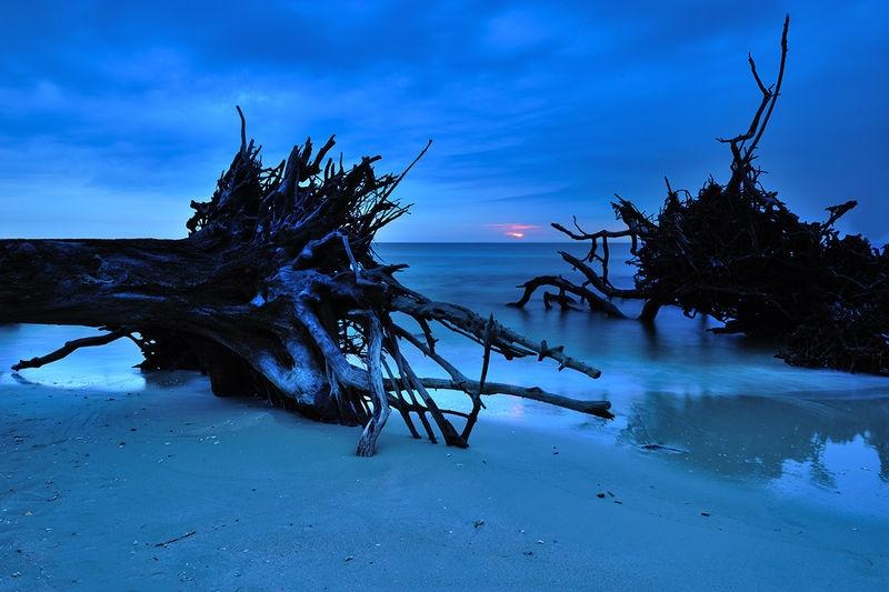 Sunrise at Driftwood Beach, Jekyll Island, Georgia