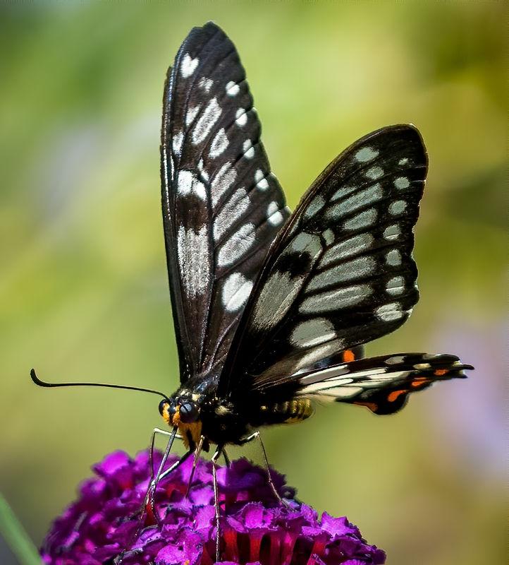 Butterfly-2-2.jpg