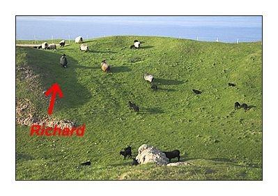Richard and his sheeps